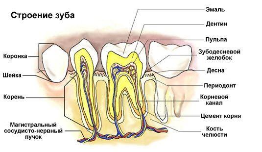 Как сделать чтобы нерв в зубе не болел